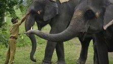 """Гледач изпълнява ритуал преди откриването на резервата за диви животни """"Побитора"""" в Асам, Индия, затворен досега заради сезона на мусоните."""