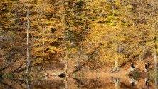 """Хора се разхождат край """"Буюкгьол"""" (Голямото езеро) в националния парк """"Йедигьолер"""" в Болу, Турция. Паркът покрива над 1600 хка гори."""
