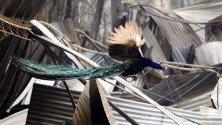 Паун лети над изгорели останки от къща след горски пожар край Тарий, Нов Южен Уелс, Австралия. Най-малко 60 пожара бушуват в региона.