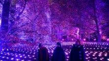 """Илюминации по време на светлинното шоу """"Коледа в Кю"""" в Кралските ботанически градини в Лондон. Около 20 км кабели са положени за светлинното шоу, което ще продължи до 5 януари."""