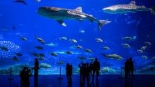 Гигантски аквариум в Ocean Park, Жухай, Китай. Жухай е известен като китайската Ривиера.