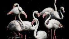 Фламинго в езеро в Jurong Bird Park в Сингапур, открит през 71-а година. В парка живеят над 400 вида птици.