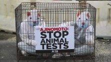 """Активисти за правата на животните са облечени като лабораторни мишки и са се затворили в клетка пред завод в Куала Лумпур, Малайзия. Членовете на РЕТА призовават компанията """"Аджиномото"""" да спре с експериментите с животни."""