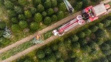 Работници режат коледни елхи в Немеспатро, Унгария, и ги опаковат преди да ги транспортират за коледните пазари.
