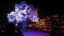 """Арт инсталацията """"Дървото на Осло"""" грее за Коледа със 125 000 светлини."""
