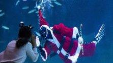 Гмуркач в костюм на Дядо Коледа забавлява посетителите на аквариума Coex в Сеул.