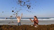 Местно дете си играе с огромни купчини водорасли на Палм Бийч в град Голд Коуст, Куийнсланд, Австралия. Явлението се случва често по това време на годината.