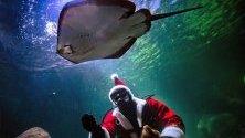 Водолаз, облечен като Дядо Коледа, храни рибите в аквариума Sea Life в Берлин, Германия.
