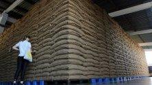 Жена проверява торби със зърна гуарана, струпани в завод в амазонския град Мауес, Бразилия. В града се произвеждат около 400 тона гуарана между октомври и декември.