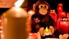 Свещи и плюшени играчки пред зоопарка в германския град Крефел, където при пожар загинаха повече от 30 маймуни