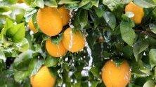 Лед по портокали в Хеброн на Западния бряг. Зимна буря обхвана крайбрежието на Средиземно море.
