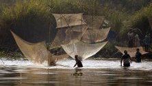 Масов риболов по време на годишния фестивал Magh Bihu в покрайнините на Гувахати, Индия.