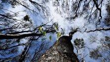 Природата започва да се възстановява след горските пожари в Нови Южен Уелс, Австралия.