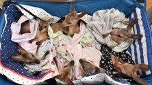 Бебета кенгуру и валаби в болница за диви животни в Куийнсленд, Австралия, където от откриването през 2004 г. са излекували над 90 000 животни, пострадали при суша, горски пожари, бури или човешка намеса.