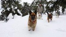 Кучета се радват на снега в планините на Кипър.
