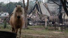 Кон пред изгорял имот в Кобарго, Нови Южен Уелс, Австралия. В града по Нова година горските пожари взеха две жертви и изгориха няколко къщи.