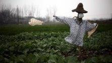 Плашило със защитна маска в поле в провинция Хубей, Китай. Властите удължиха Пролетния празник до 2 февруари, заради разрасналата се епидемия от коронавирус в провинцията.