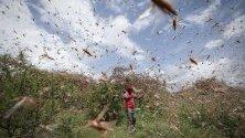 Сомалия е първата държава от Африканския рог, която обяви извънредно положение заради нашествието на скакалци.