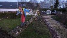 Дете се е качило върху паднало дърво след преминаване на бурята Киара в Намур, Белгия.