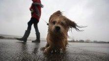 Жителка на град Харлинген, Холандия, и кучето й се разхождат по време на силен вятър, причинен от бурята Киара.