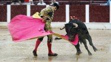 Колумбийският матадор Маноло Кастанеда в борба с бик в Богота, Колумбия.