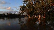 Наводнени дървета от река Балоун в Куийнсленд, Австралия, вдигнала нивото си с 12 метра.